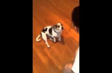 Girl Teaches Her Dog To Meow Like A Cat