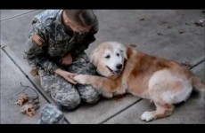Dog Has The Sweetest Reaction To Soldier Owner Coming Home