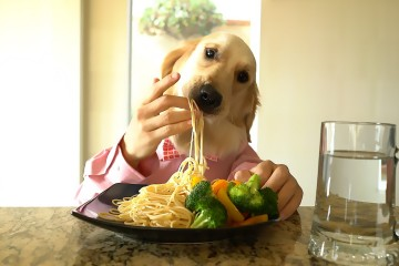 Chef Dog Enjoys A Fancy Meal