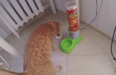 Diy Arduino Cat Feeder - Cat Pushes The Button To Get Food