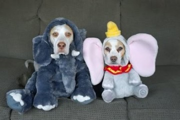 dog-costumes-for-halloween
