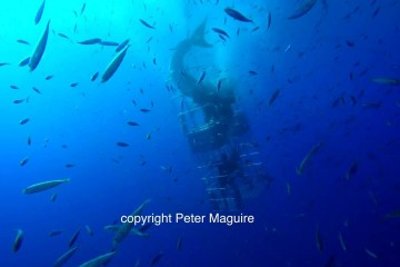 great-white-shark-attacks-cage-divers
