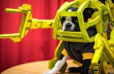 a-puppy-in-an-aliens-power-loader-suit