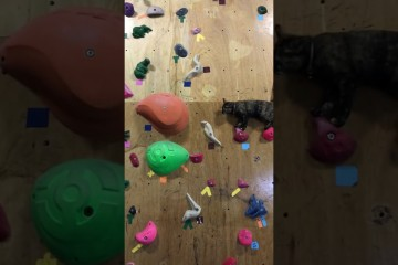 cool-cat-conquers-climbing-wall
