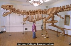 life-size-giant-t-rex-dinosaur-made-of-balloons