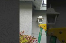 Man Destroys Yellow Jacket Nest With Bare Hands