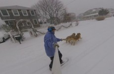 using-the-golden-retrievers-for-a-bit-of-snow-sledding