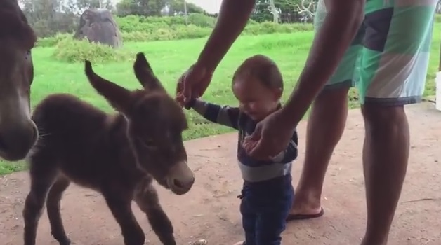 Baby Meets Mini Donkey