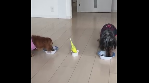 Little Bird Races to Eat Next to His Doggie Brothers