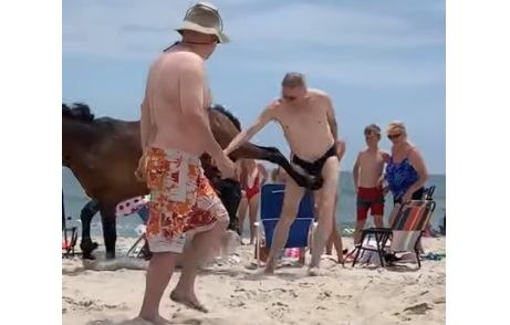 Don't Touch The Horses