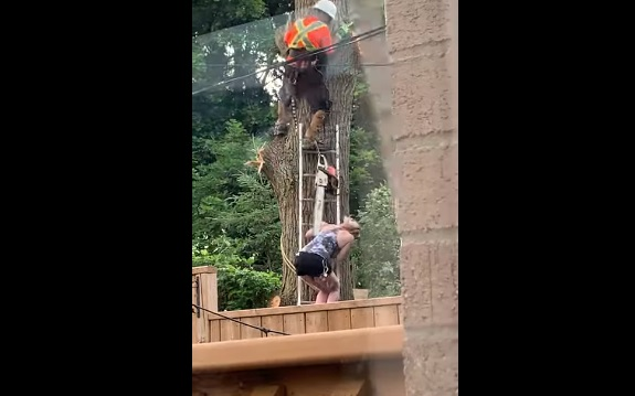 Lucky Lady Avoids Tree Cutting Chaos