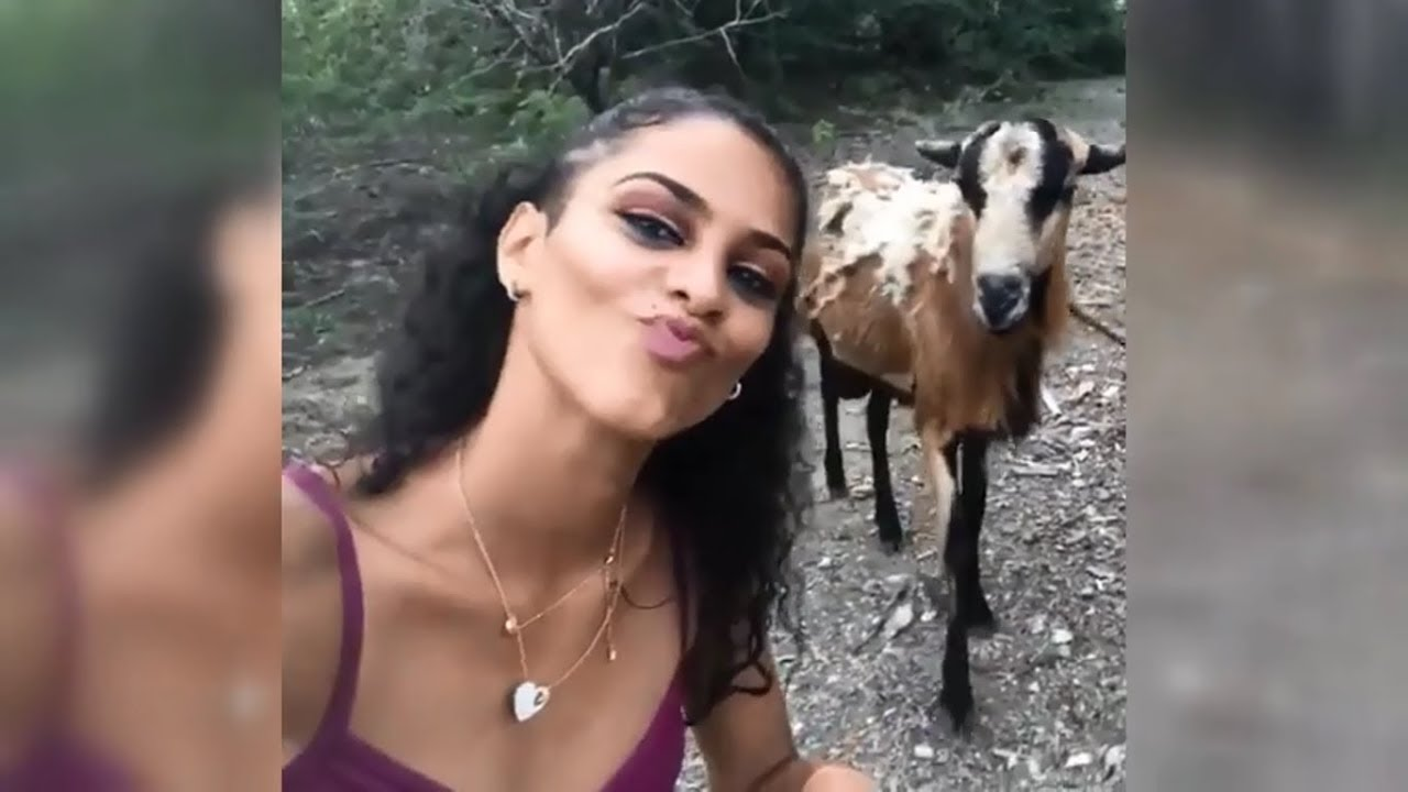 Goat Doesn't Appreciate Selfies