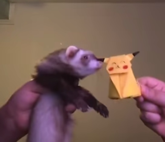 Having A Bad Day? This Dancing Ferret Will Surely Cheer You Up!
