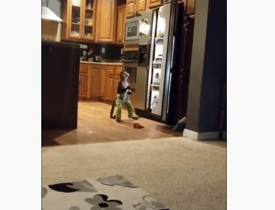 Monkey Takes Out The Whipped Cream From The Fridge