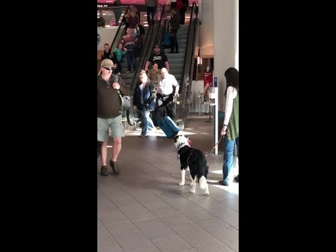 Dog Starts Jumping With When It Gets Reunited With Returning Soldier!