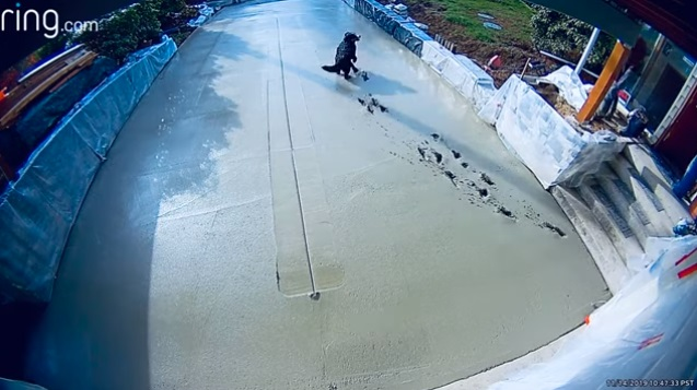 Dog Destroys Fresh Concrete By Jumping Around In It!